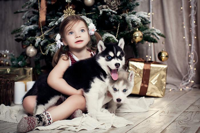Щенки хаски с ребенком