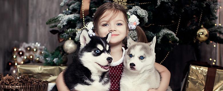 Портрет ребенка с щенками хаски